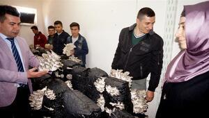 Talep patlaması yaşandı  Bodrum katında yetiştirildi, kilosu 10 TL