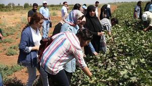 Suriyeliler tarım sektörüne kazandırılıyor