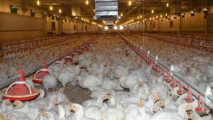 Kanatlı et sektörüne 50 milyon TLlik destek