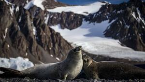 Beyaz kıta Antarktika