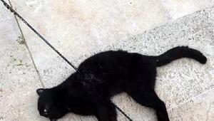 Urlada kediyi okla vurdular
