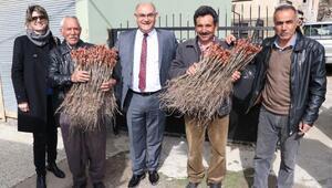 Pozantı'da 40 çiftçiye 7 bin üzüm fidanı dağıtıldı