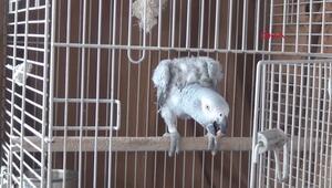 Papağan Paşa Simav şivesiyle ilgi odağı oldu