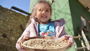 Kastamonuda çocuklar siyez buğdayını hamur işi yaparak tanıyor