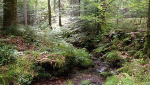 ABnin yüzde 43ü ormanlık alandan oluşuyor