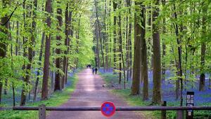 Türkiyenin orman varlığı 22,6 milyon hektarı geçti