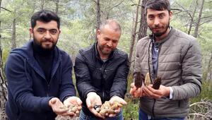 Kilosu 600 TLye satılıyor Köylüler ormana akın ediyor