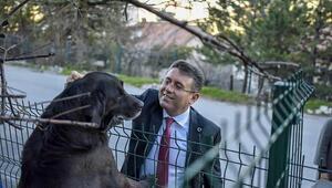 Sokak hayvanları için yaşam köyü kuracağız