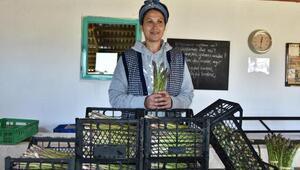 Kuşkonmaz üretiminde iyi tarım sertifikası ile büyük mağazalara girdi