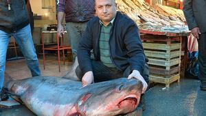 Sapan cinsi köpek balığını avlayana 1635 TL ceza
