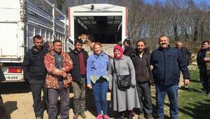 Demirköy'de genç çiftçilere 35 büyükbaş hayvan dağıtımı yapıldı