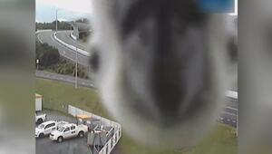 Meraklı papağanın mobese kamerasına ilgisi