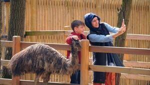 Ormanya'daki yavru deve turistlerin ilgi odağı oldu