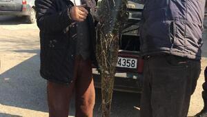 Orhaneli'nde 16 kiloluk yayın balığı yakalandı