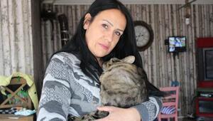 Kemik kanseri nedeniyle felç kalan kedi, sevgiyle yaşıyor