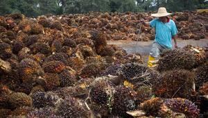 Endonezya ve Malezyadan ABye palm yağı itirazı