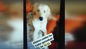 Skandal görüntü Köpeğine bunu yapıp paylaştı...
