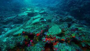 Antalyada 3 bin 600 yıllık gemi batığı bulundu