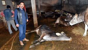 Sivasta, şüpheli hayvan ölümleri tedirgin etti