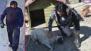 İzmirde bir köpeğe isyan ettiren şiddet