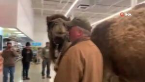 700 kiloluk devesi ile petshopa gitti