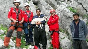 Mahsur kalan 3 keçi 6 saatte kurtarıldı