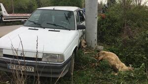 Otomobil çobana ve koyunlarına çarptı
