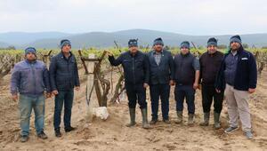 Dolu yağışı Saruhanlıda ekili araziler ve seralara zarar verdi