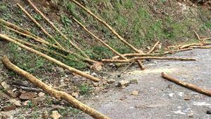 Koruma altındaki ağaçları kesen iki kardeş yakalandı