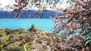 Çiçeklere bürünen Akdamar Adası görsel şölen sunuyor