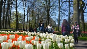Dünyanın en büyük lale bahçesi