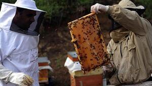Arı sütünün faydaları neler