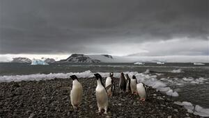 Antarktikada binlerce yavru penguenin öldüğü tespit edildi