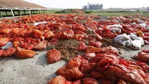 Polatlıda tonlarca çürümüş soğan atıldı