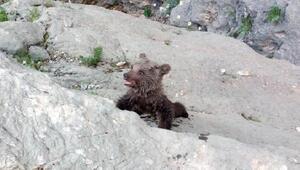 Kayalıklarda mahsur kalan yavru ayı kurtarıldı