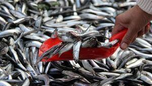 Balık tezgahları çarpan ve hamsi ile süslendi