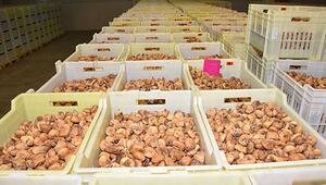 Kuru incir ihracatı yüzde 20lik azaldı