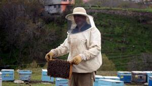 Ruhsatsız ilaçlar bal arılarını telef ediyor