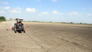 Antalya'da pamuk ekimi başladı