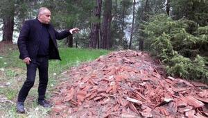 Çam ormanları moloz ve atıklara teslim