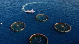 Su ürünlerinde yıllık 20 bin ton hedefi