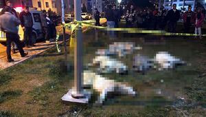 Ankaradaki köpek katliamında istenen cezalar belli oldu
