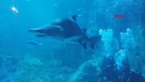 Dünyanın en büyük akvaryumunda ne kadar balık tüketiliyor