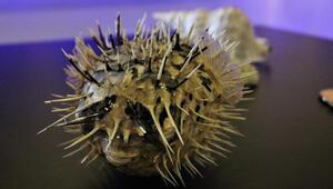 Türkiyenin sucul canlıları bu müzede incelenecek