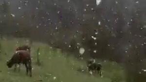 Karabükte mayıs karı