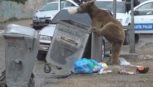Aç kalan bozayı iftar saatinde mahalleye indi