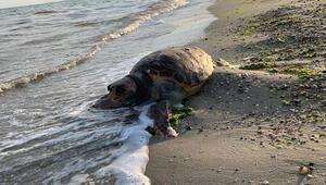 Silivri'de sahile vurdu Herkes şaşkına döndü…