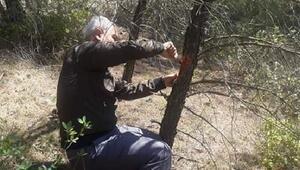 Ormanlara zarar veren haşerelerle ilgili çalışma başlatıldı