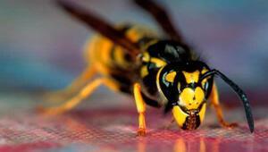 Eşek arıları meğer denklem de çözebiliyormuş