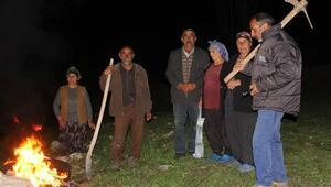 Ayılar köye dadandı... Köylüler kazma ve kürekle nöbet tutuyor